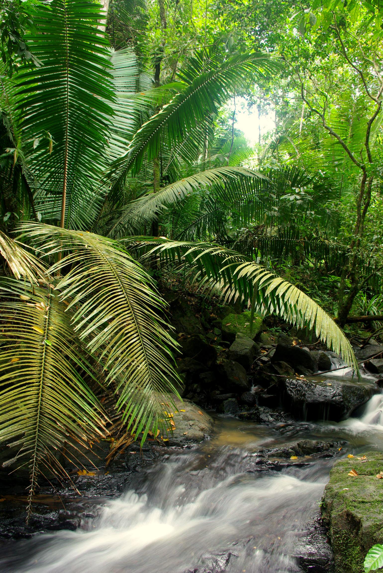 Фотография. Путешествия. Фотопутешествие по джунглям Амазонки
